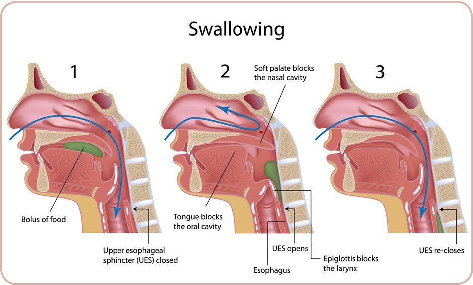 Swallowing Archives Healthcare Therapy Services